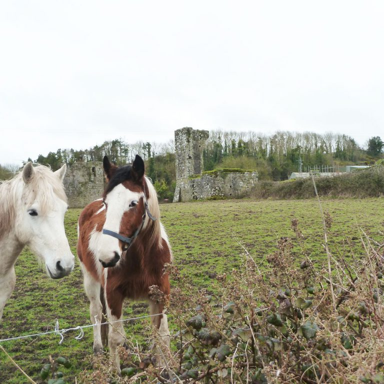 Horses resting by Ballybeg Abbey Buttevant